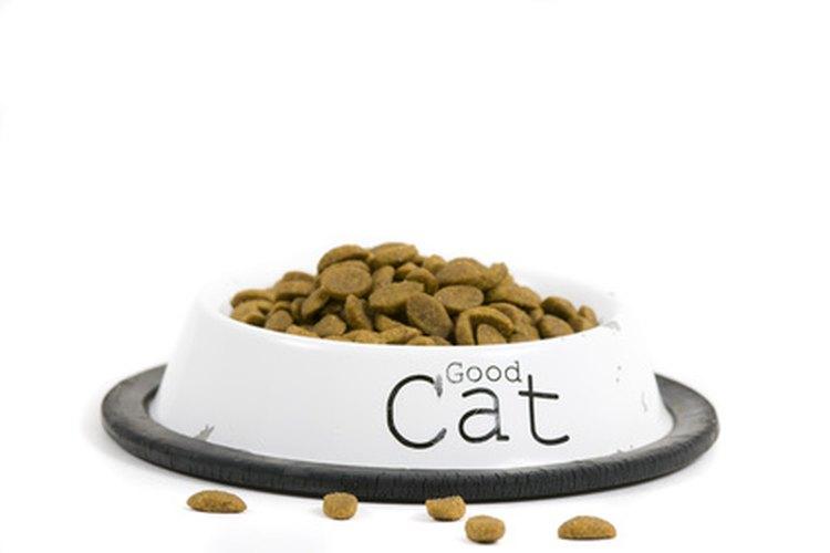 Es importante que tu mascota esté bien alimentada cuando no estás en tu casa.