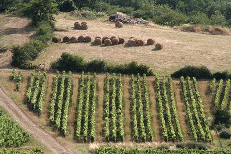Región de Beaujolais en Francia.