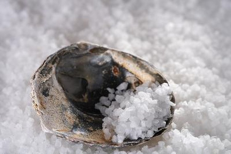 Utilizar sal para preservar.