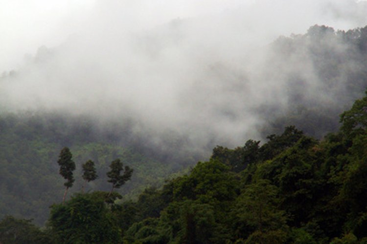 Las maderas duras exóticas a menudo provienen de las selvas tropicales.