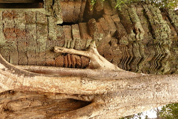 Raíces de un árbol.