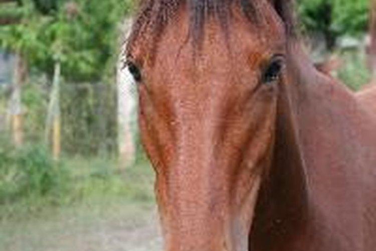 Cuida a tu caballo de parásitos.