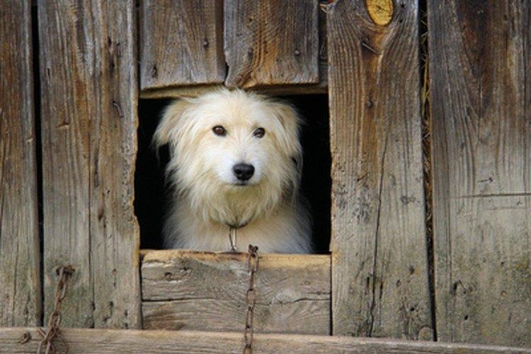 Las razas de perros con pelaje largo requieren cortes de forma regular.
