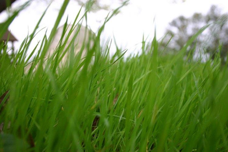 La hierba crecerá en el concreto a medida que haya drenaje.