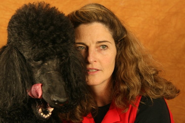Aprende por qué tu perro te lame la cara.