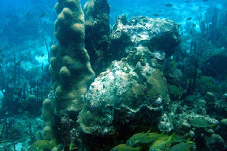 El Gran Arrecife de Coral es un lugar de Patrimonio Mundial de la UNESCO.