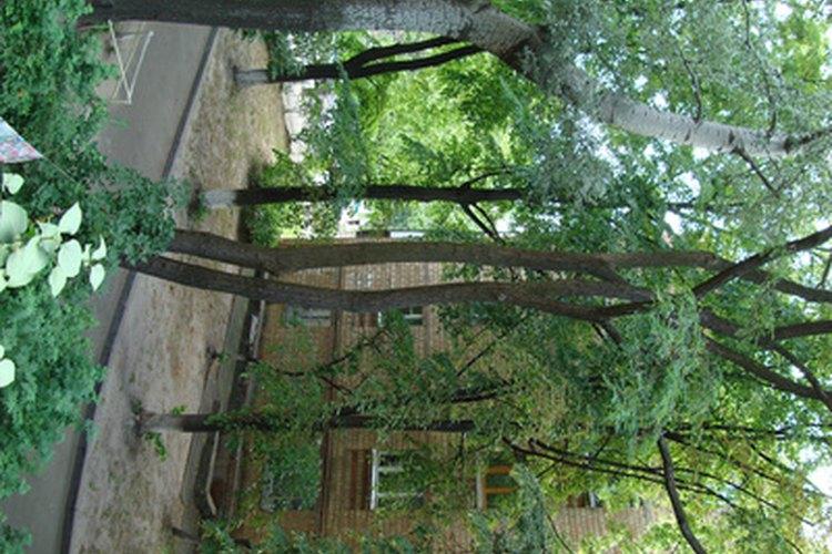 Árboles para jardín delantero