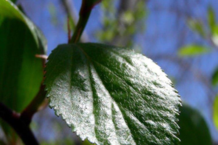 Las plantas usan la fotosíntesis para convertir la luz en energía.