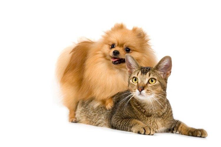 Advantage hace productos de control de pulgas para perros y gatos.