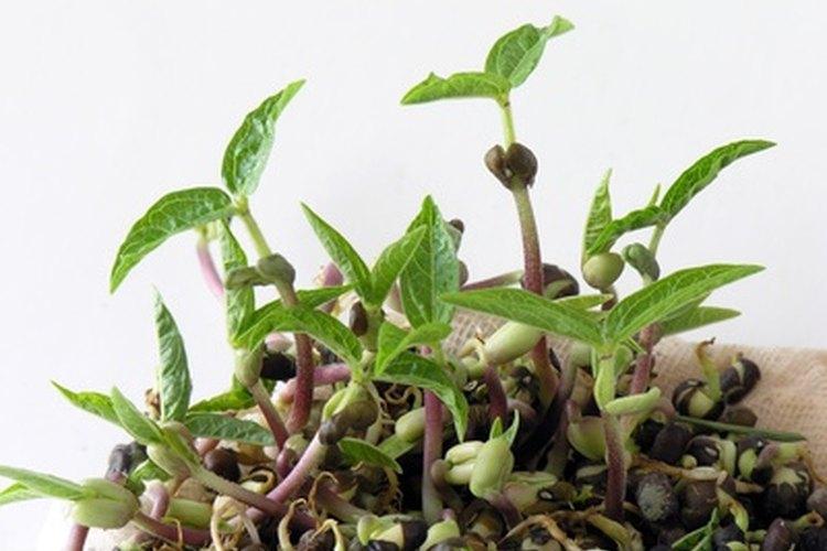 Observa el desarrollo de una semilla.