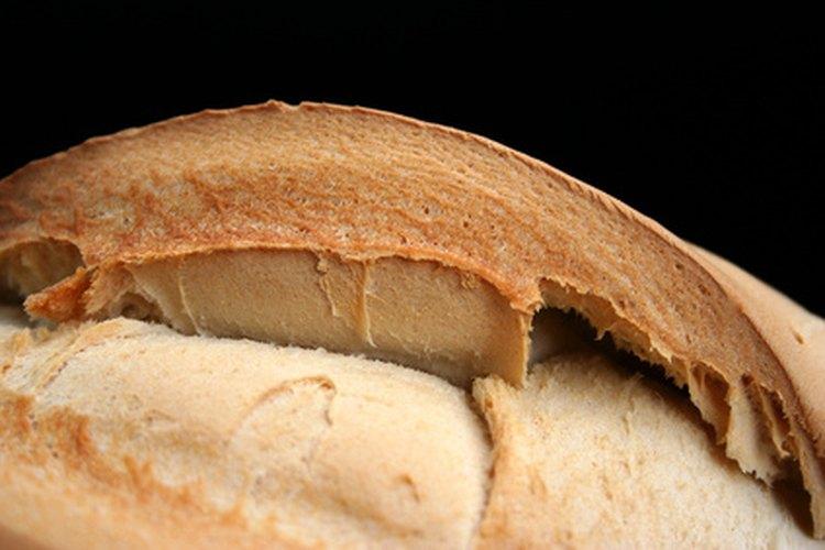 El moho se reproduce mediante las esporas, que aterrizan en el pan y obtienen energías para convertirse en hongos.