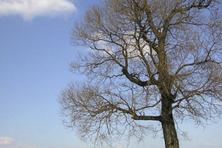 En temperaturas muy bajas, a veces el cuerpo puede luchar contra el viento.