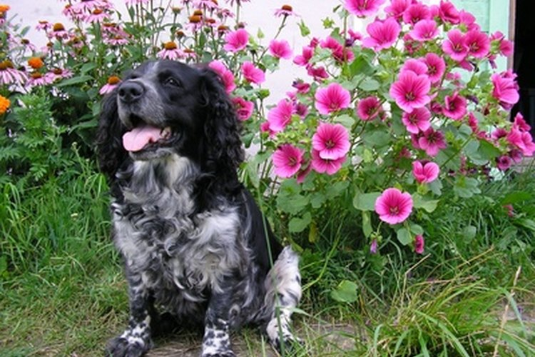 Mantén a los perros alejados de los lugares en los que no deberían estar con el repelente para perros.