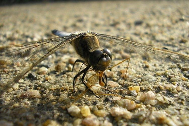 La mayoría de los insectos se adaptan principalmente a vivir en la tierra.