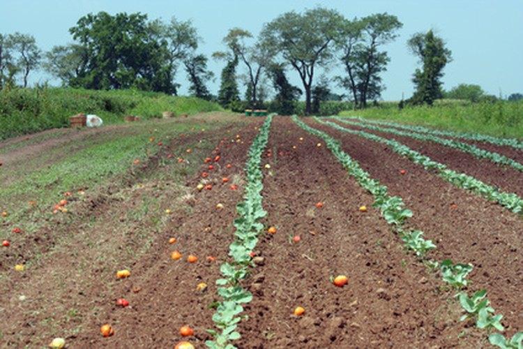 ¿Qué tipo de cultivos se pueden desarrollar en tu granja?
