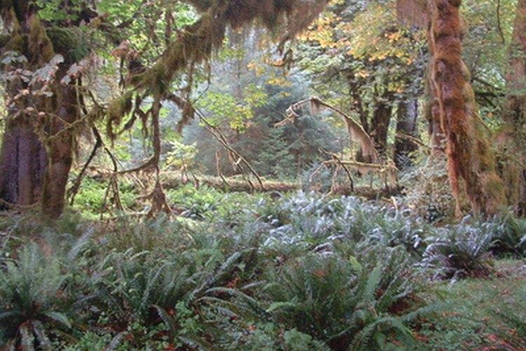 Muchas plantas son únicas en la selva del Amazonas.