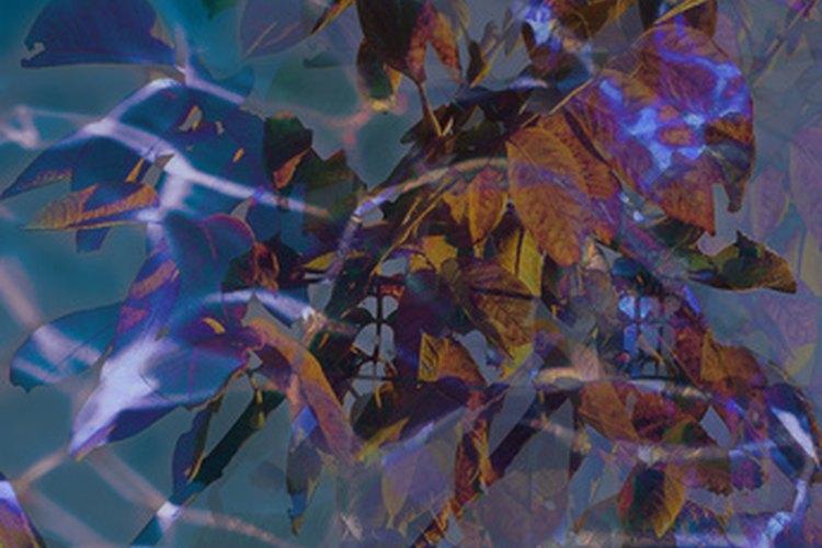 Una imágen generada por computadora (CGI) ofrece muchas opciones de trabajo en efectos especiales.