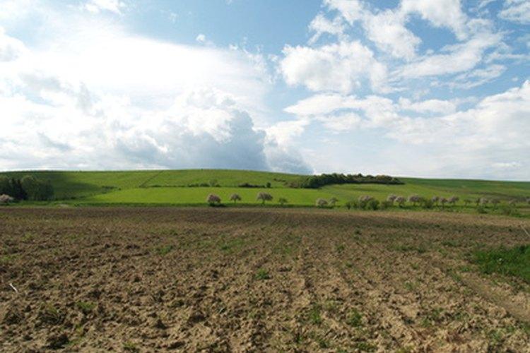 Las granjas tienen pasto y campo.