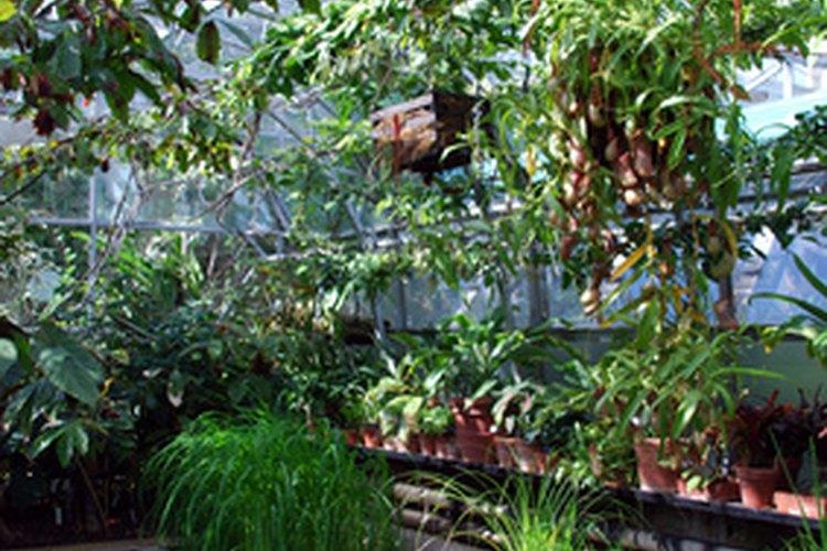 El interior de un invernadero simula un ambiente de primavera.