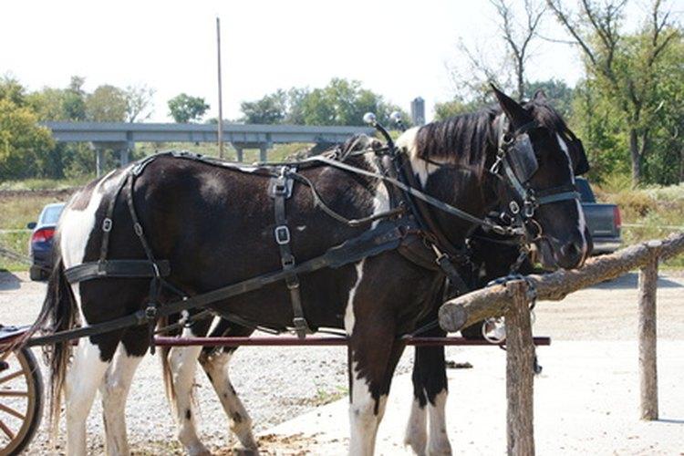 Las comunidades Amish viven según un código de conducta general.