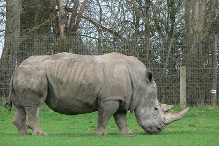 La organización Salvar al Rinoceronte enlista la población de rinocerontes en aproximadamente 25,000.