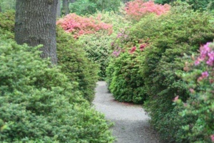 Un espejo puede sugerir un jardín escondido.