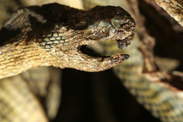 Existen serpientes de todos los tamaños y las formas.