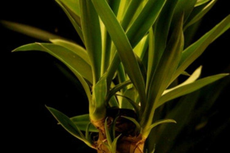 Coloca plantas en macetas en toda la habitación para darle una sensación de selva.