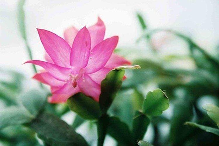 Plantas que no necesitan mucha luz del sol o agua - Plantas de interior que no necesitan luz ...