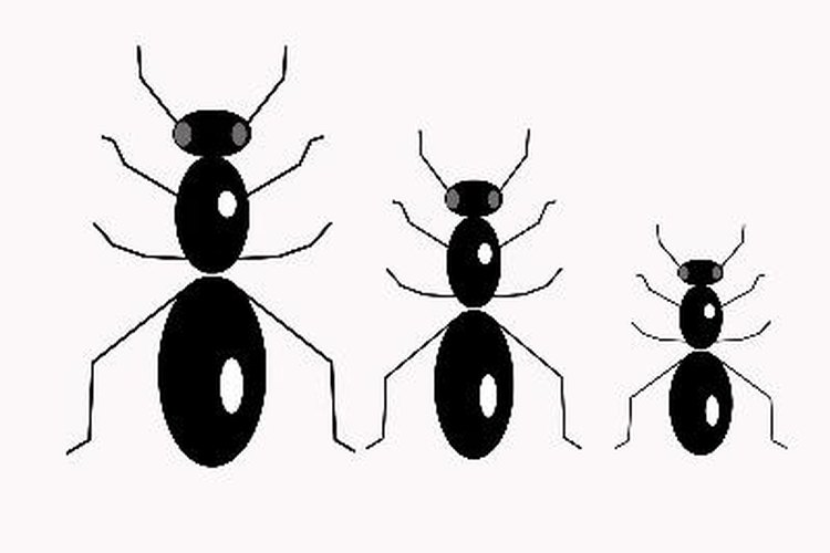 ¿Cómo se comunican las hormigas?