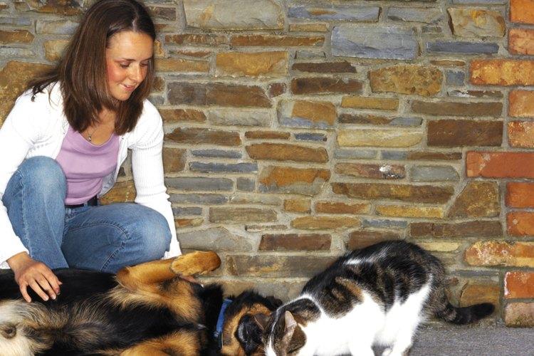 Tanto perros como gatos muestran emociones cuando exponen su barriga a los humanos.