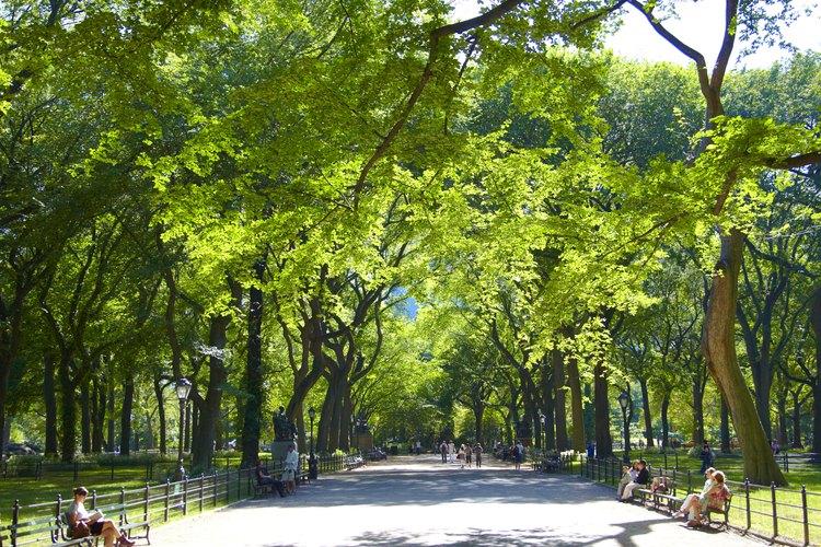 El pitosporo del Japón es tolerante a un amplio rango de condiciones de luz, incluyendo la sombra parcial.