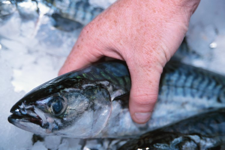 Sólo descongela el pescado para ser consumido que haya sido apropiadamente congelado y almacenado.