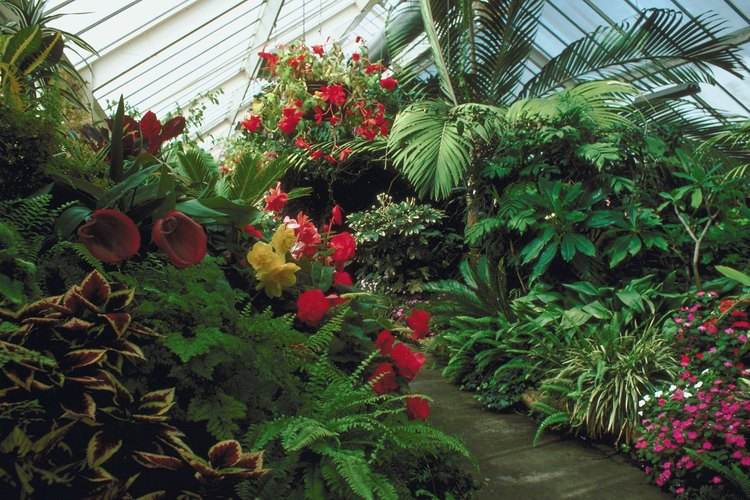 Este vivero ofrece 69 variedades de árboles frutales tropicales.