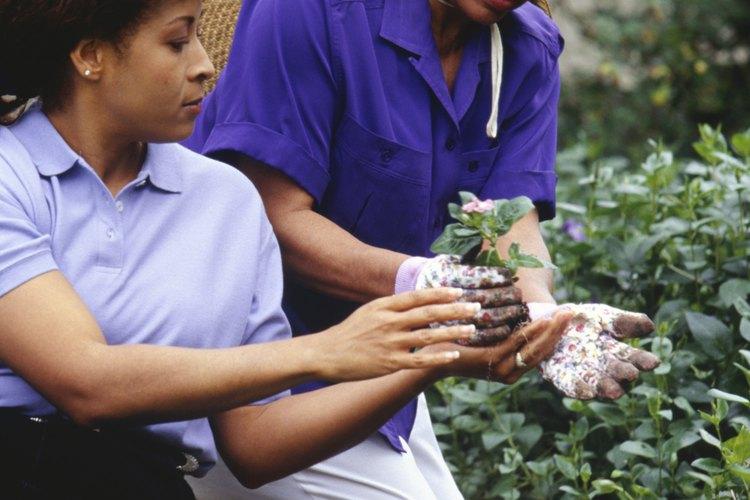 Esteriliza el limo del compostaje o jardín.