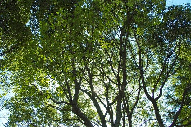 Las plantas realizan fotosíntesis y respiración celular para crear, almacenar y usar energía.