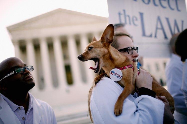 Manifestaciones por los derechos animales.