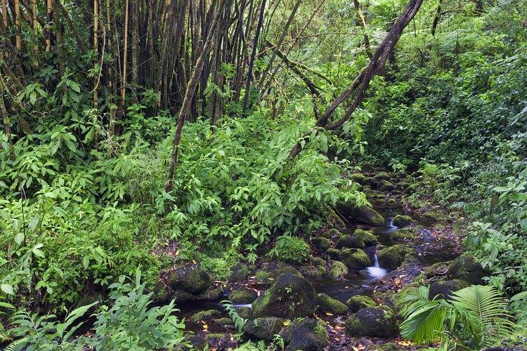 Los bosques templados respiran oxígeno, ésto les permite a las personas respirar.