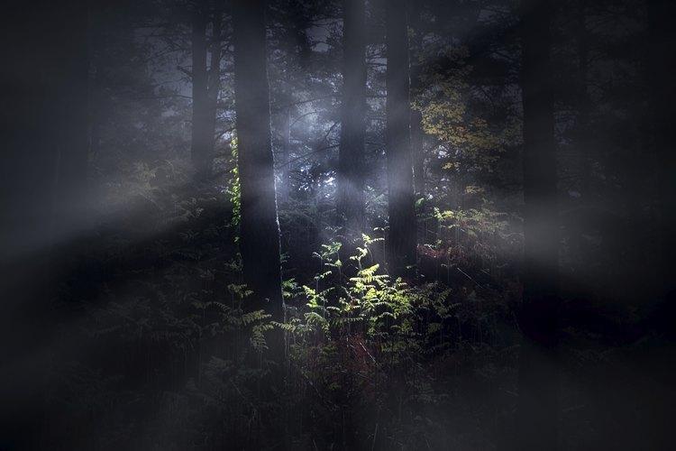 Una amplia variedad de sucesos paranormales han sido reportados en Sweet Briar.