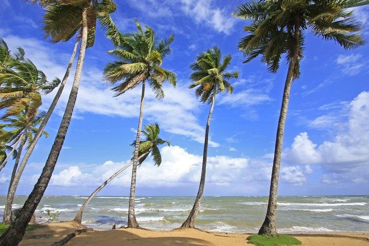 Las playas Terrenas, República Dominicana.