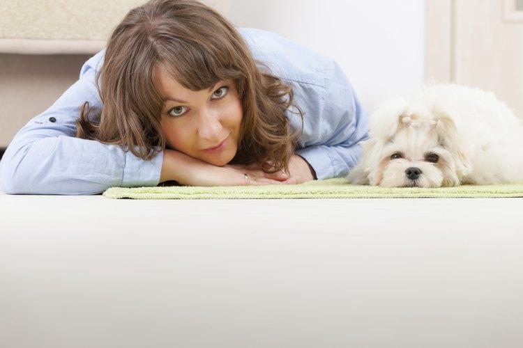 Tu perra puede sentir la necesidad de estar cerca de ti cuando está por parir.