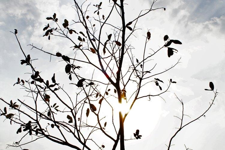 Una imagen del otoño.