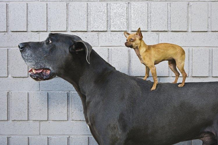 Vacuna a tu perro.