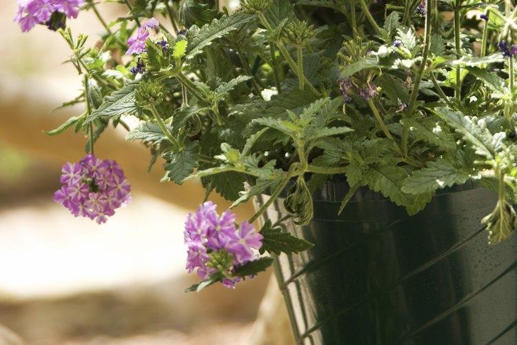 Diseña tu jardinera de hormigón.