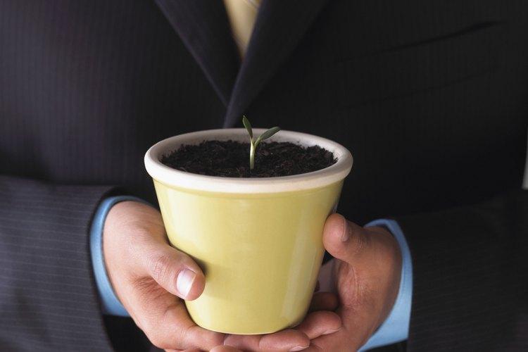 Transplanta el arbusto de lima en una maceta del vivero de 8 pulgadas (20,32 cm).