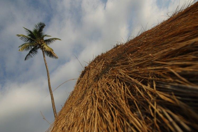 Los techos de palma de paja proporcionan sombra refrescante en los días calurosos y soleados.