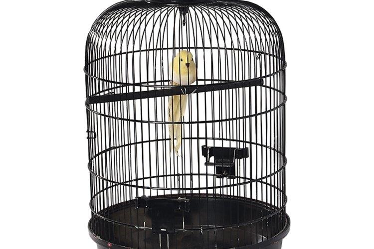 Los canarios macho cantan mejor cuando están en una jaula individual.
