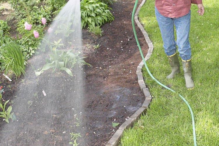 Dando un exceso de agua al aloe puedes provocar desarrollar putrefacción.