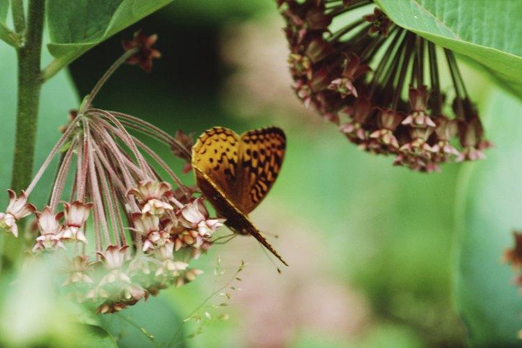 Mantén el suelo húmedo y las semillas deberían germinar dentro de siete a 10 días.