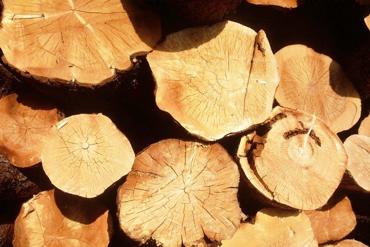 Los troncos pueden consagrarse para hacer macetas para plantas.